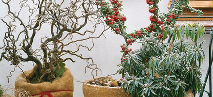 Protection plantes