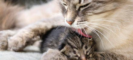 Chaton et chat