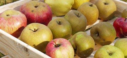 Fruits conservés en cellier