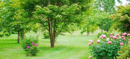 Arboretum d'Adeline