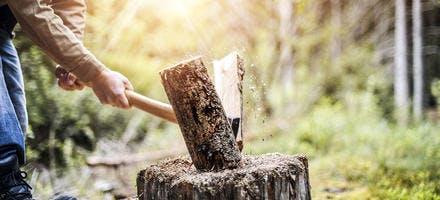 coupe de bois avec hache