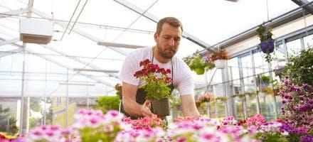 Vendeur dans une jardinerie