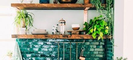 plantes d'intérieur sur des étagères dans une cuisine