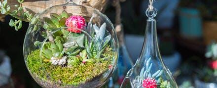 terrarium suspendu avec des succulentes