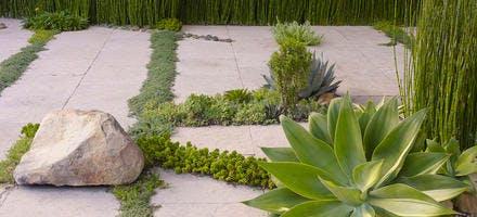 plantes entre les dalles dans un jardin de Californie