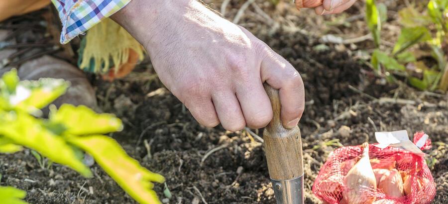 Que Faire Au Jardin En Mars Conseil De Jardinage 2018