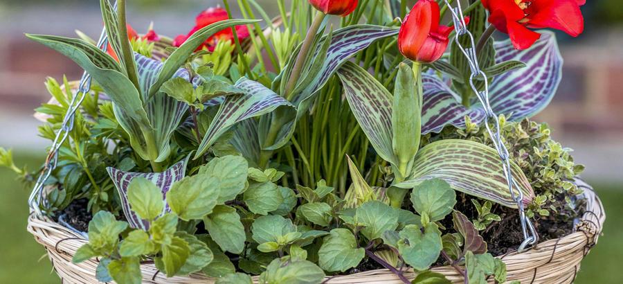 Suspension de plantes DIY