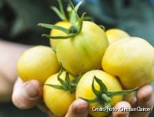 Tomate white Wonder