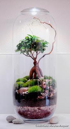 Décoration terrarium humide