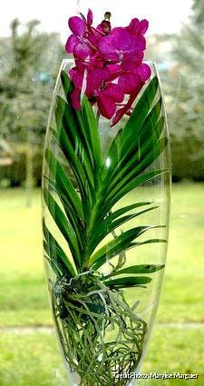Vanda en vase