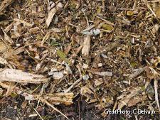 Débris de bois broyés