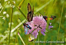 Photo d'insectes sur une fleur