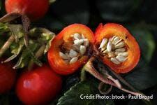 dj_rosier-fruit_graine_istock_paul_broad.jpg