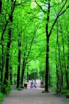chemin au puy du Fou en Vendée
