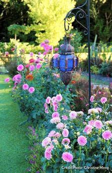 jardin dans le medoc avec massifs de dahlias