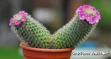 Cactus simple à cultiver