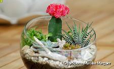 dja_terrarium-succulentes13b_mm.jpg