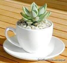 dja_terrarium-succulentes21_mm.jpg