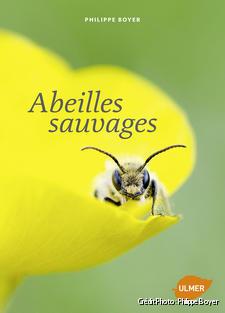 djweb_abeillessauvages_couverture_abeilles_sauvages.jpg