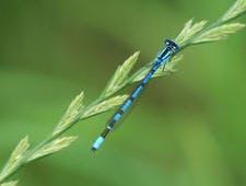 djweb_insectes_libellule_cf_spipoll_michel_marly_0.jpg