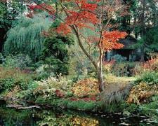 djweb_japon_courances_aube_dans_le_jardin_japonais.jpg