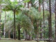 La palmeraie du jardin de la Balata en Martinique