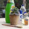 Fabriquer un insecticide naturel maison
