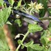 Fleur sur plant de tomate