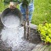 Quelles plantes du jardin peuvent profiter de la cendre de bois