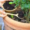 Marc de café dans pot avec plantes