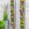 Mur végétal extérieur sur grillage