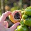 Tomate et maladie du cul noir